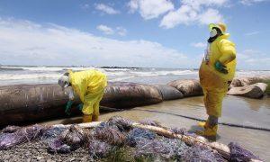 Tentativa de reparo dos danos ambientais do derramamento recente de petróleo no Golfo do México, USA