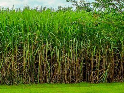 """Ampliar a cota de importação de etanol """"trará prejuízos às empresas brasileiras"""""""
