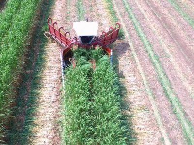 Relato de uma descoberta: a colheita mecanizada de cana inteira