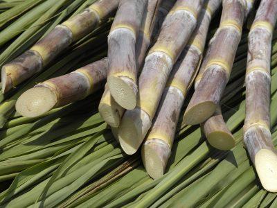 Valorização do etanol influencia gratificação compensatória de cortadores de cana-de-açúcar na Paraíba